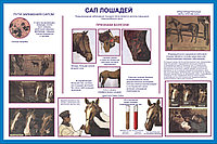 Плакаты Уход за лошадьми, фото 1