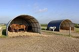 Строительство коровника, свинарника, конюшни, телятника, птичника, овчарни, фото 4