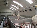 Строительство коровника, свинарника, конюшни, телятника, птичника, овчарни, фото 5
