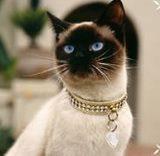 Ошейники, шлейки для кошек