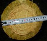 Установка деревянных опор ЛЭП, Строительство линий электропередач и связи на столбах ЛЭП высотой от 6,5 до 11, фото 4
