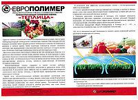 teplitsa_rozovaya.jpg