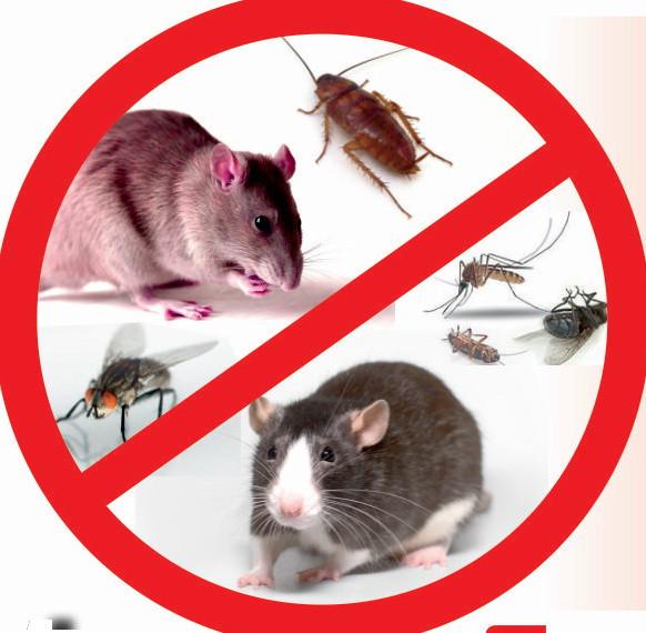 Обработка от грызунов, мышей, насекомых
