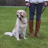 Trixie Тренировочный намордник-узда для собак, служит для обучения и дрессировки. 46 см, длина поводка 54-66, фото 1