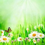 Увлажняющий кондиционер мягкого действия Selective Natural Flowers Hydro Conditioner 250 мл., фото 2