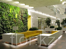Озеленение офисов, квартир, коммерческих помещений. Фитодизайн.