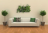 Озеленение офисов, квартир, коммерческих помещений. Фитодизайн., фото 2