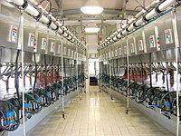 Бизнес план организации молочно-товарной фермы