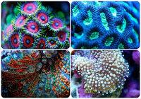 Кораллы для рифовых аквариумов и живые растения
