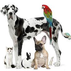 Услуги для домашних животных