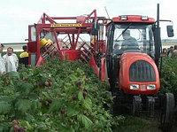 Мировой опыт выращивания малины. Урожайность по странам.