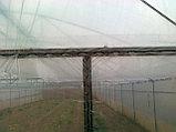 Пленка тепличная (12месячная) ширина 8м, фото 2