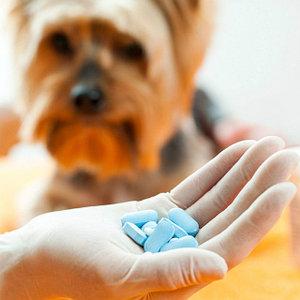 ветеринарные препараты для лечения мочекаменной болезни