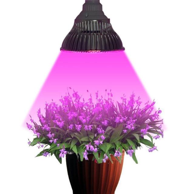 Фитоосвещение для теплиц и домашних растений