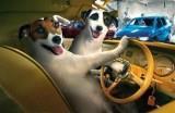 Зоотакси для  животных (временно не работает)