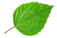 Зеленая IP АТС iPECS MG