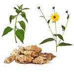 Топинамбур(земляная груша)