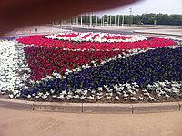 Цветочная рассада 32 расцветки