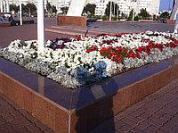 Расада цветов в Казахстане