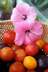 """Алмазная вышивка """"Гибискусы и ягоды"""" 30х40 см"""