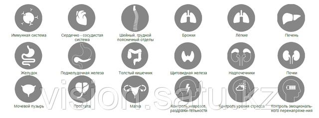 Тестирование органов и систем организма