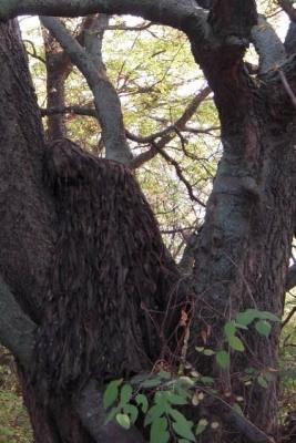 """Маскировка под ствол дерева при помощи маскировочной накидки """"Леший"""""""