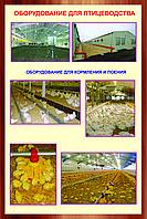Оборудование для птицеводства, фото 1