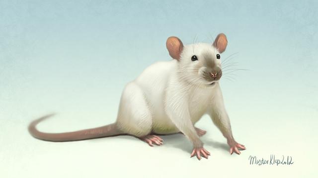 Уничтожение крыс. Дератизация, уничтожение крыс, мышей, кротов и прочих грызунов