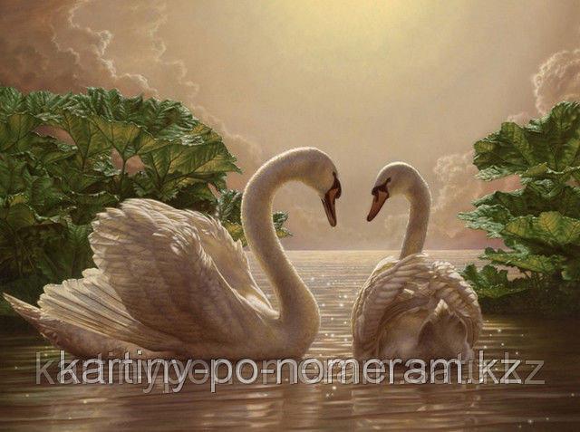"""Картины раскраски по цифрам (по номерам) """"Прекрасные лебеди"""""""
