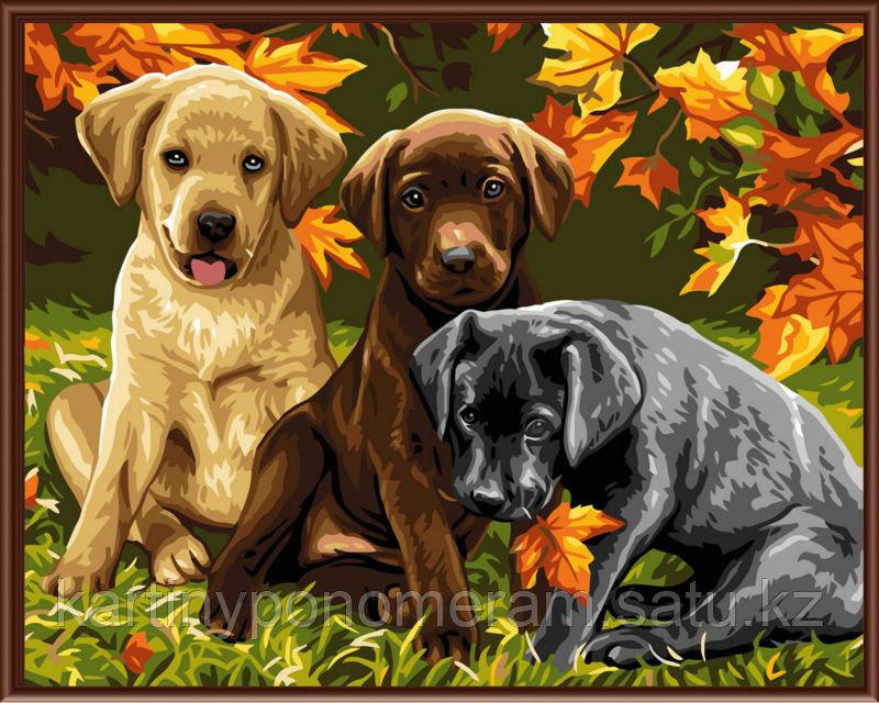 """Картины-раскраски по номерам,  """"Три щенка"""""""
