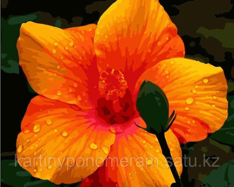 """Картина по номерам """"Гавайский цветок"""""""