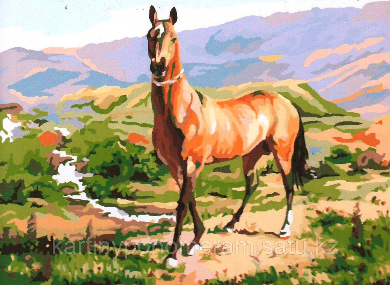 """Картина по номерам """"Вольный конь"""""""