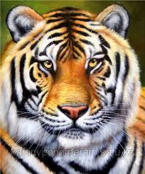 """Картина по номерам """"Тигр 2"""""""