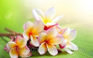 """Картина по номерам """"Тропические цветы"""""""