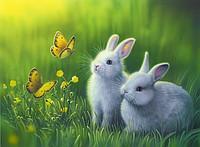 """Картины по номерам """"Два белых зайчонка"""""""