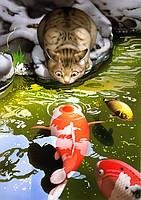 """Картины по номерам """"Котенок у пруда"""""""