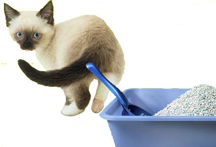 Наполнитель кошачьих туалетов