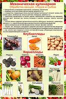 Плакаты Механическая обработка овощей, фото 1