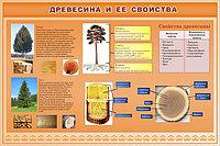 Древесина и её свойства, фото 1