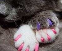 Накладные ногти, антицарапки, цвета в ассортименте
