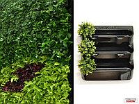 Фитомодуль 62х62 см, цвет - черный, для вертикального озеленения