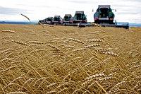 Бизнес-план в сельском хозяйстве