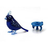 Птичка с  кольцом