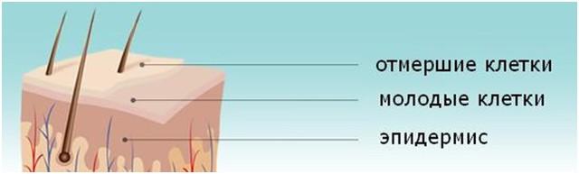 Попадая на кожу, кристаллы отшелушивают отмершие клетки с поверхности кожи