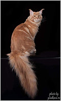 1 МАРТА  всемирный день кошек!