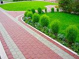 Комплексное озеленение, фото 2