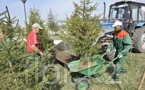 Высадка уличных деревьев,газонов,кустарников и цветников