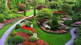 Высадка уличных деревьев,газонов,кустарников и цветников, фото 3