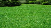 Высадка газона