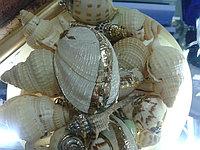 Кулон Декоративные ракушки